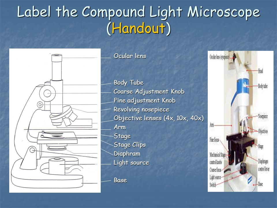 Microscope basics 1 parts and focusing ppt download label the compound light microscope handout ccuart Image collections