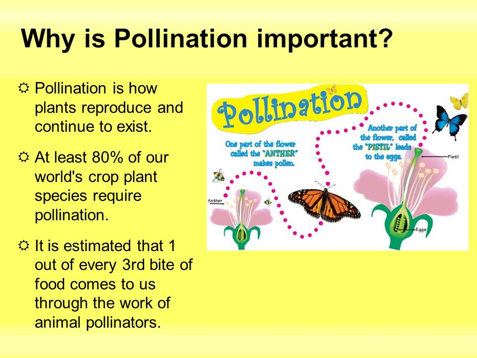 Why is pollination important to sexual reproduction in plants