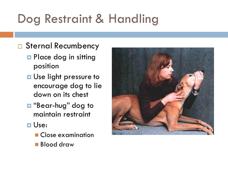 Proper Animal Handling Amp Restraint Ppt Video Online Download