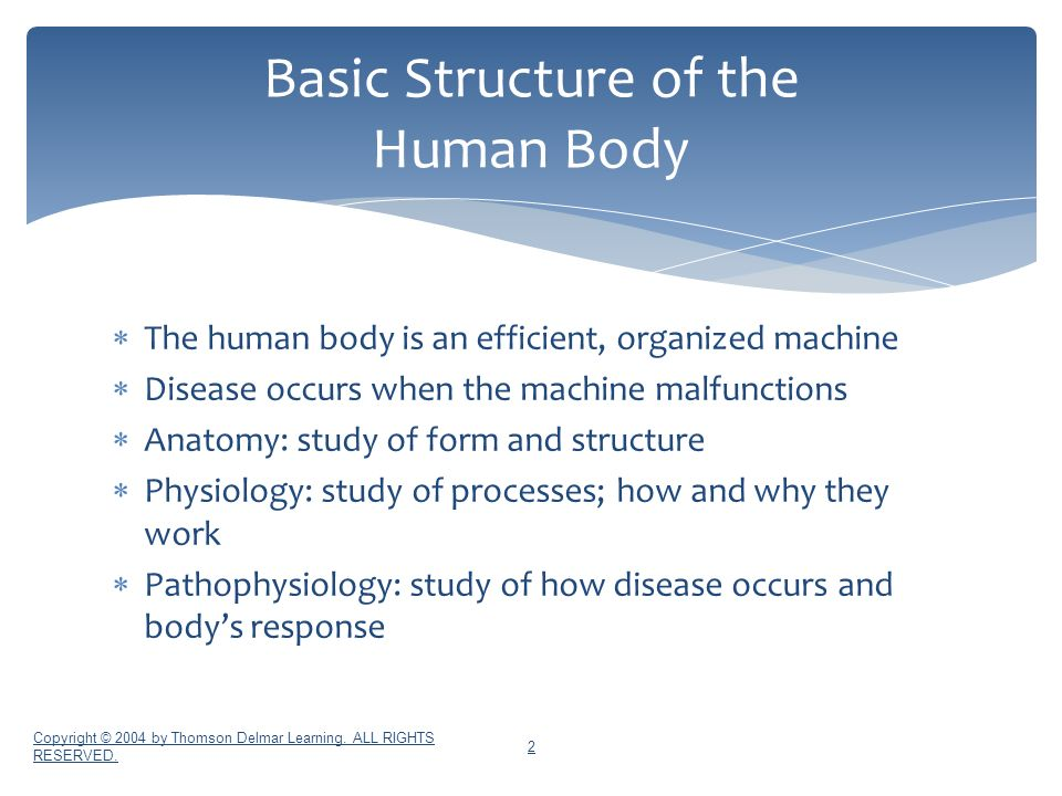 Unit 6 Anatomy and Physiology - ppt download