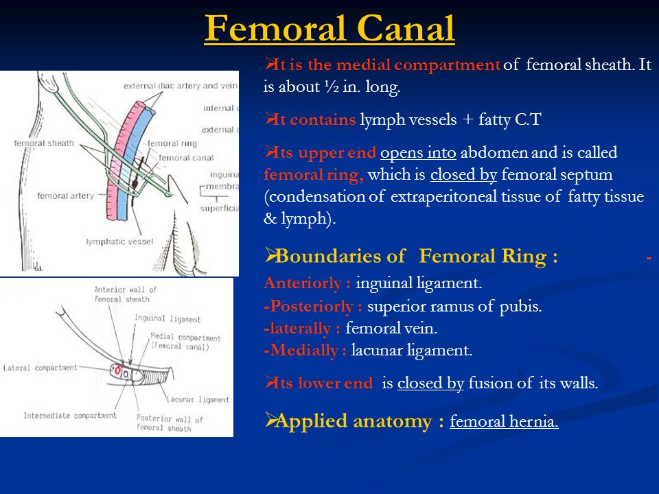 Superficial Fascia of the Thigh - ppt video online download
