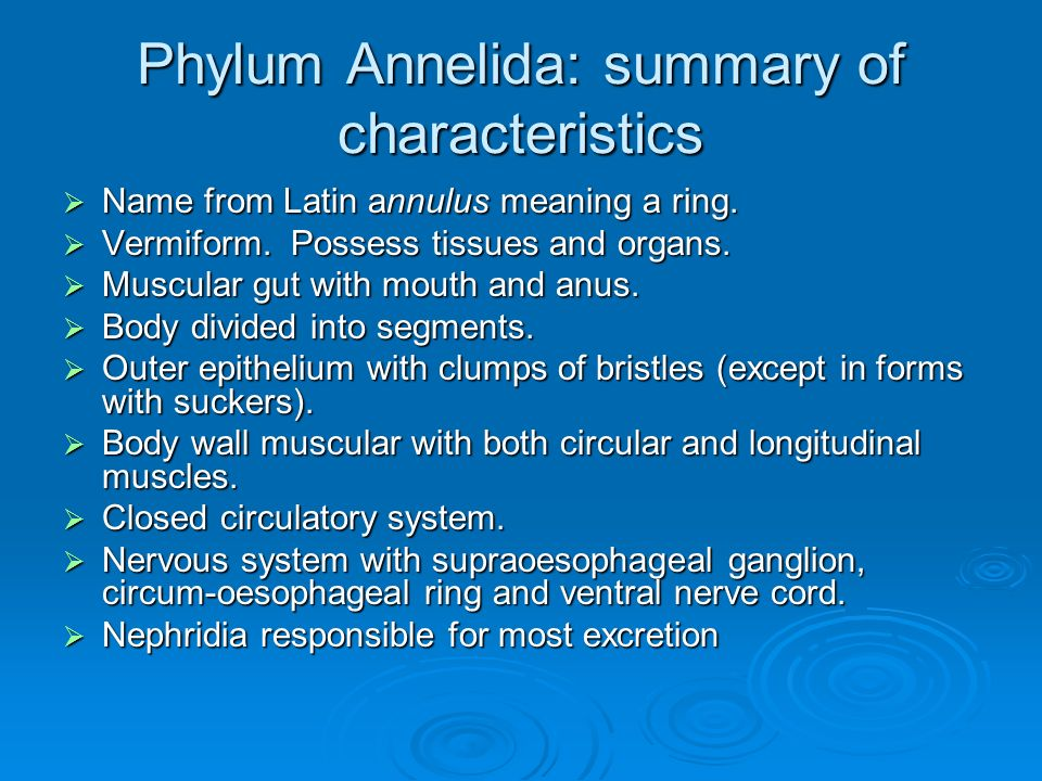 Phylum annelida the segmented worms ppt video online download.