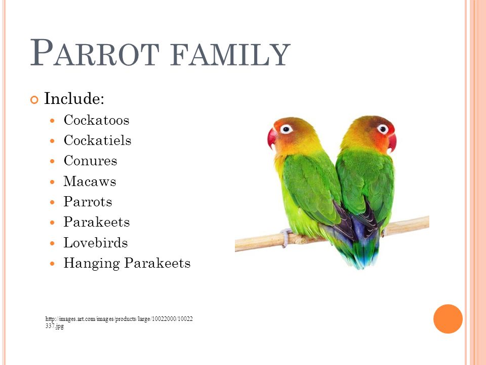Domesticated Birds Small Animal Care Ppt Download