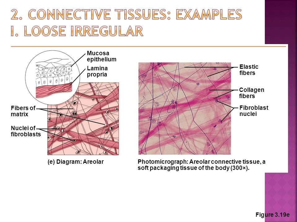 Unit 3 Histology Anatomy And Physiology Ppt Video Online Download
