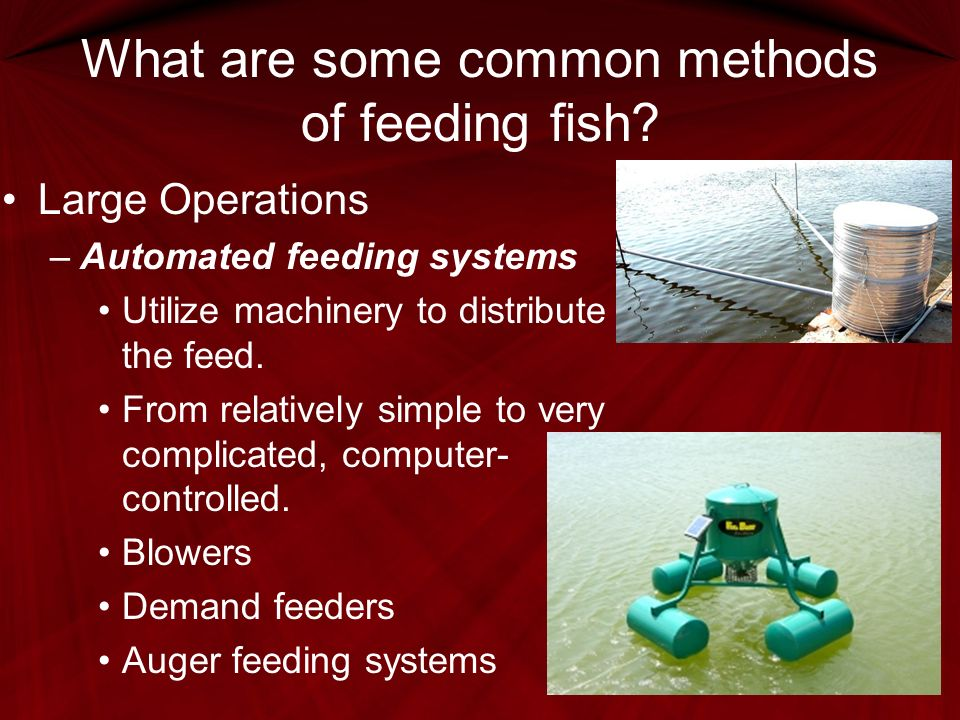 Fish Digestion and Feeding - ppt video online download