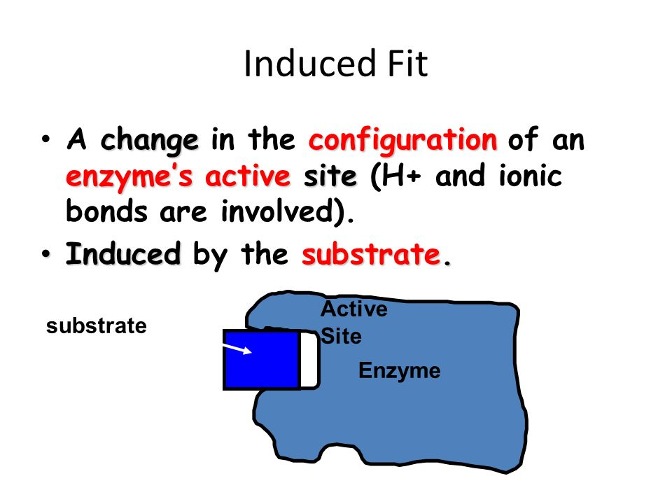 Induced Fit A change in the configuration of an enzyme's active site (H+ and ionic bonds are involved).