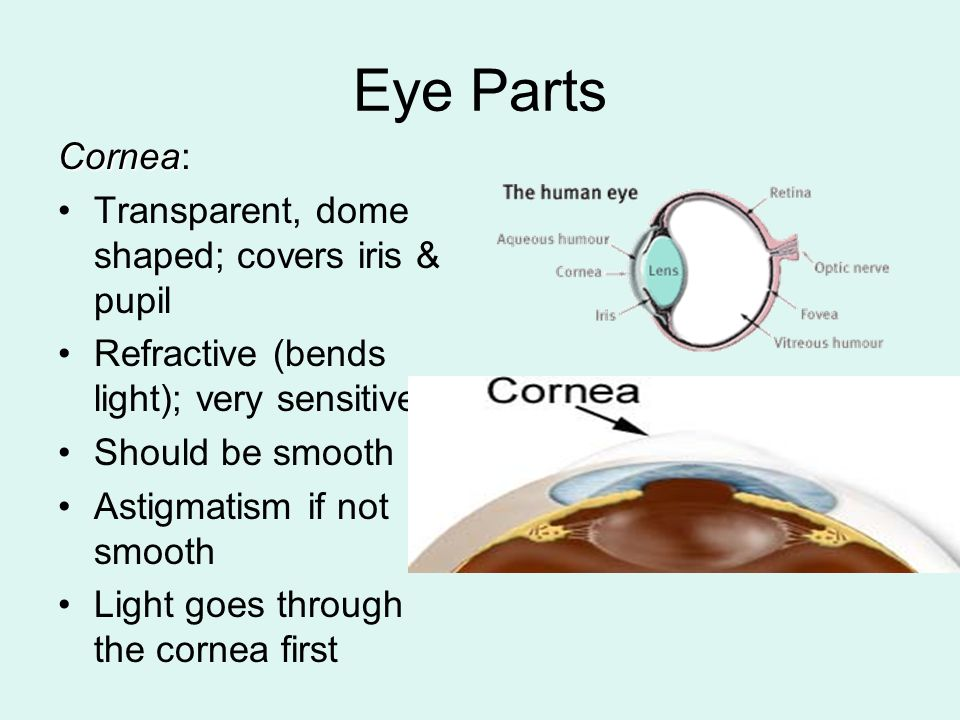 Eye Anatomy Human Eye Ball Is About 1 Inch In Diameter Ppt Download