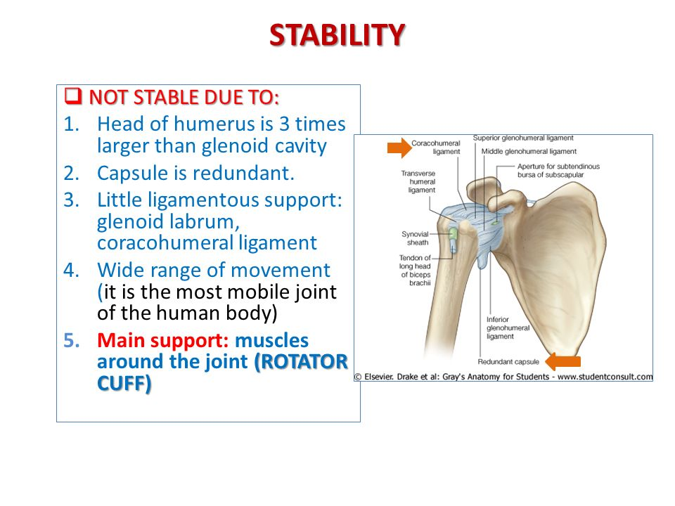 Anatomy Of The Shoulder Region Ppt Video Online Download