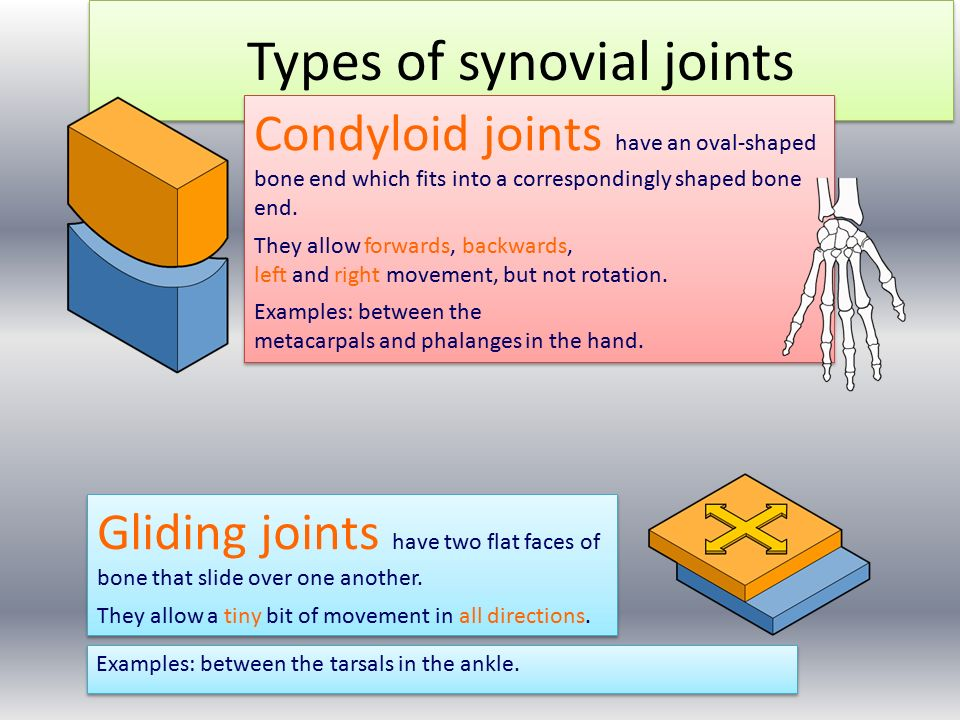 L10b synovial joints.
