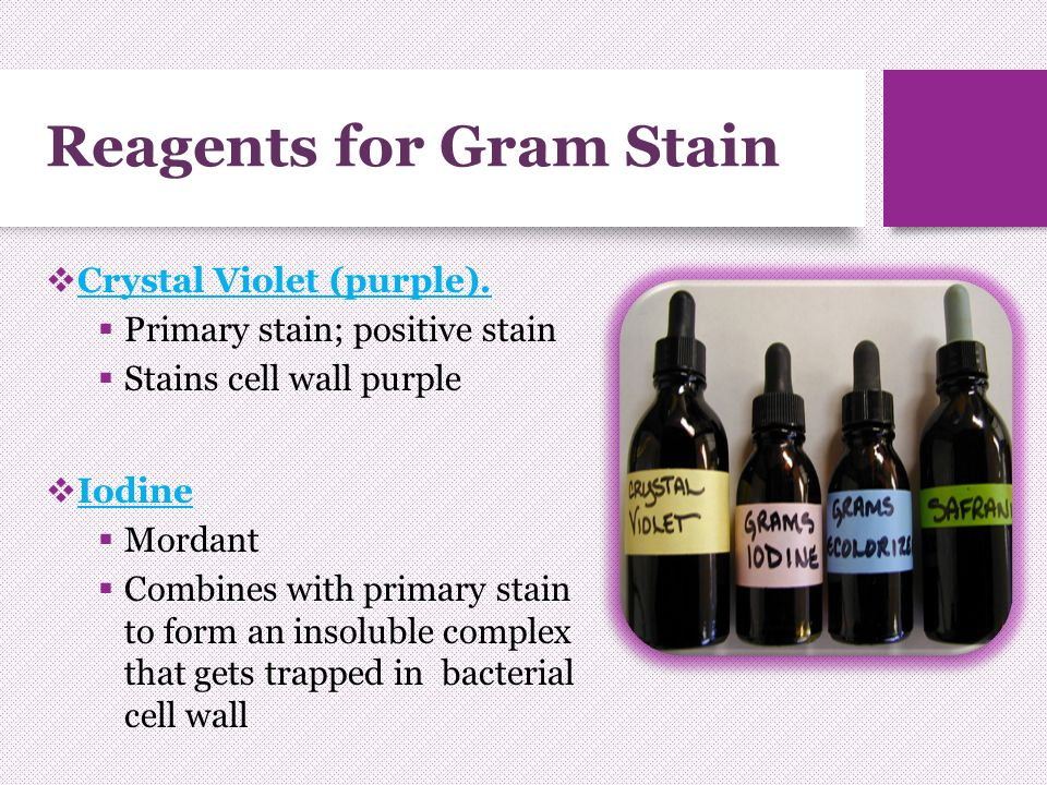 Gram stain differential stain hans christian gram a danish doctor 7 reagents ccuart Images