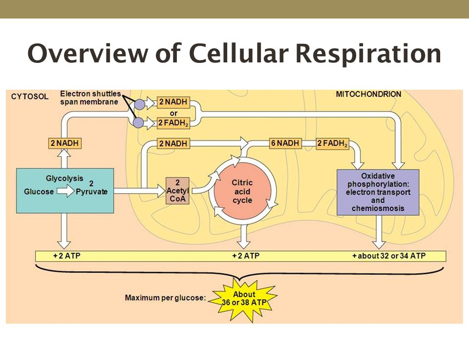 Cellular Respiration Chapter 9 Ppt Download