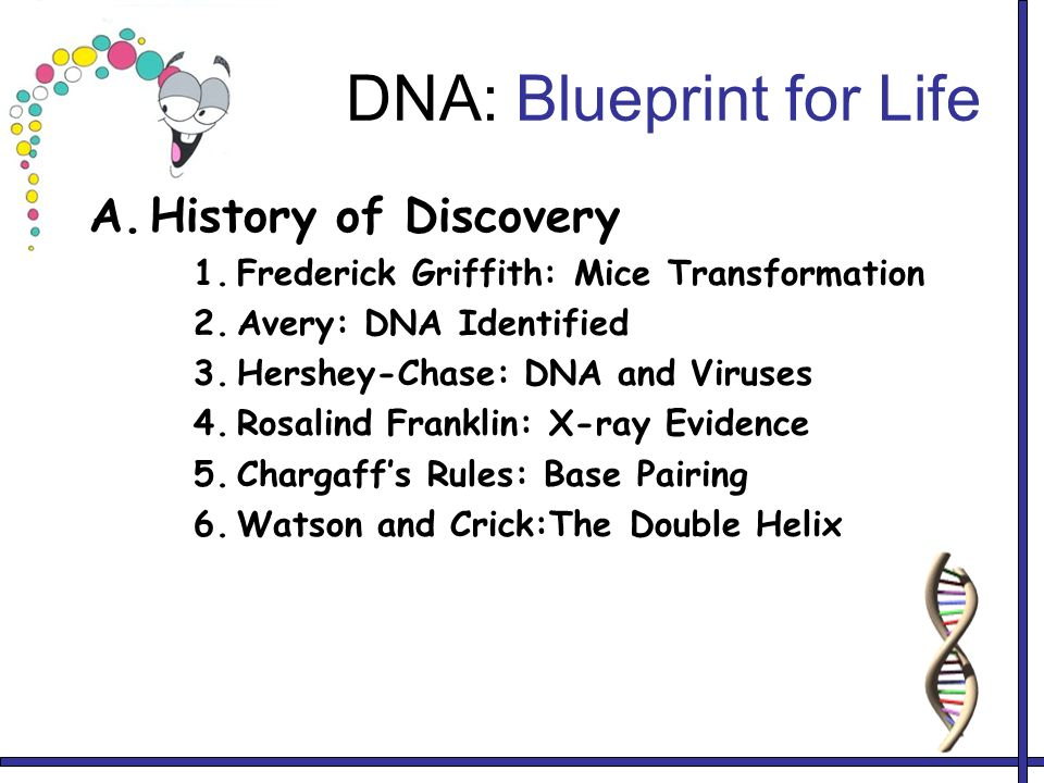 History of dna dna discovery rna transcription translation mutations 2 dna blueprint for life malvernweather Gallery