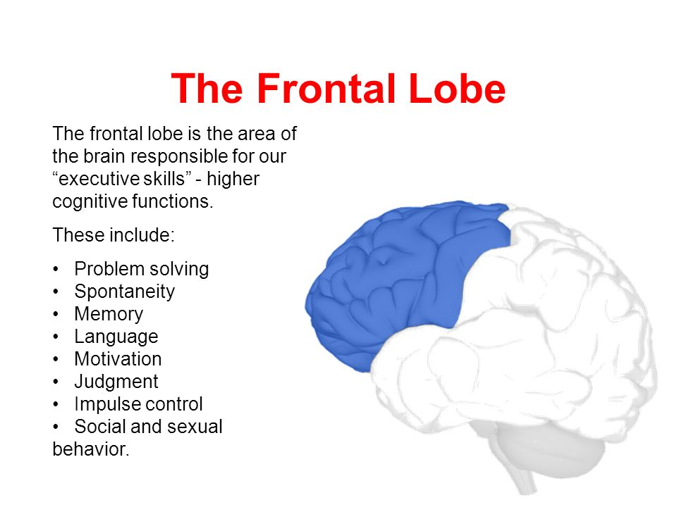 Frontal lobe damage and sexual behavior