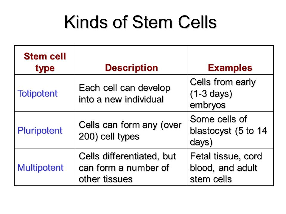 Stem cells ppt video online download kinds of stem cells stem cell type description examples totipotent toneelgroepblik Image collections