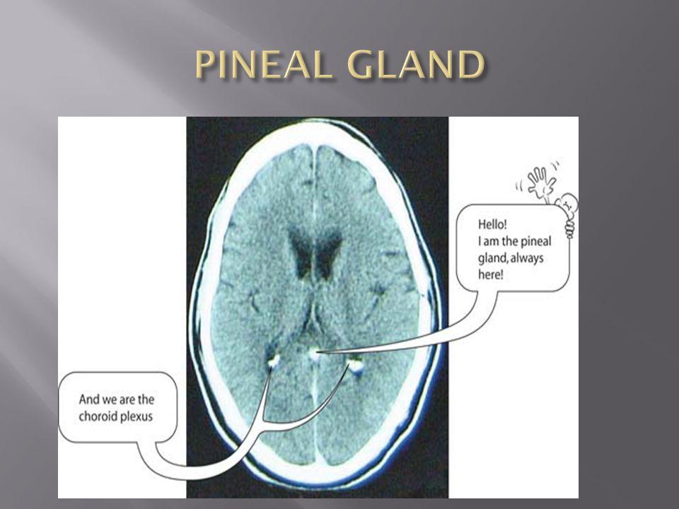Ct Brain Anatomy Ppt Video Online Download