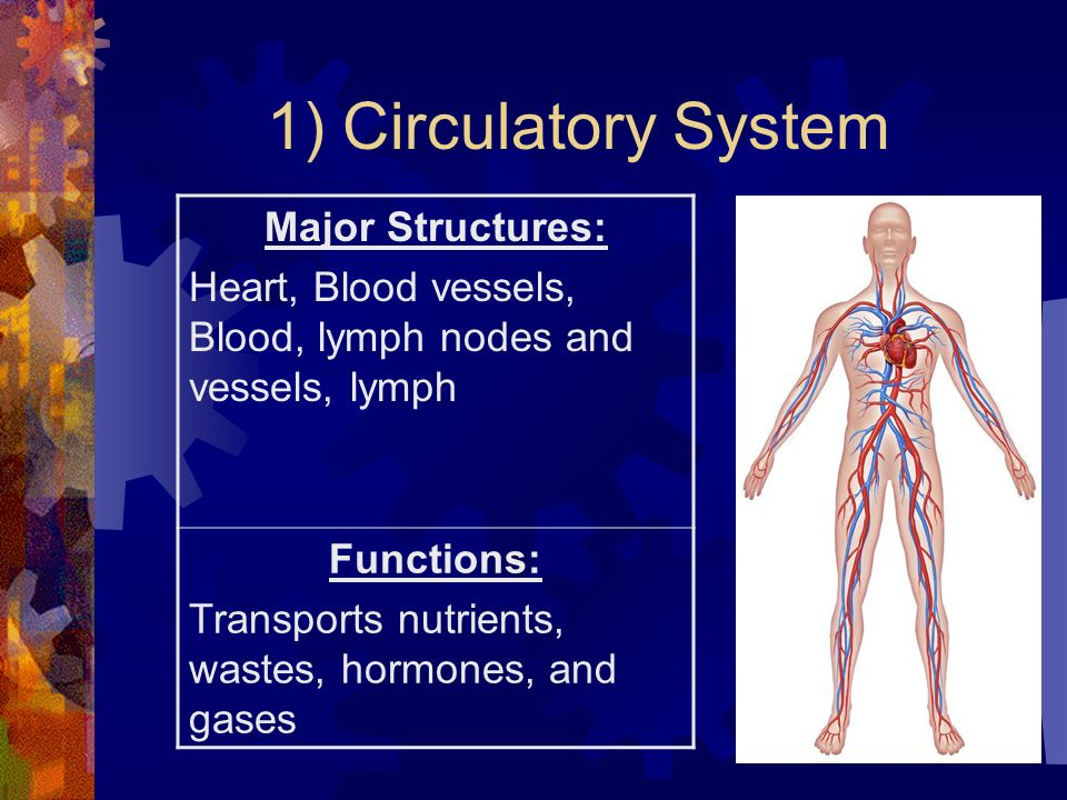11 Major Organ Systems In The Human Body Ppt Download