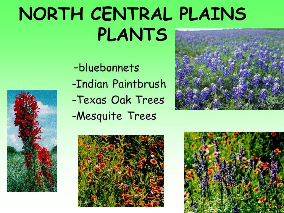 Regions Of Texas Ppt Video Online Download