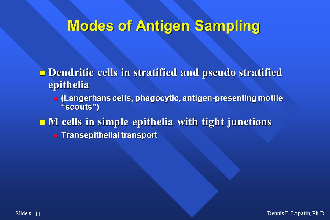 Modes of Antigen Sampling