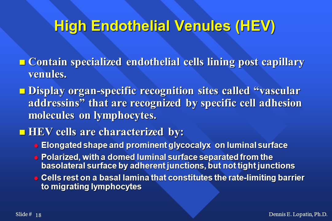 High Endothelial Venules (HEV)