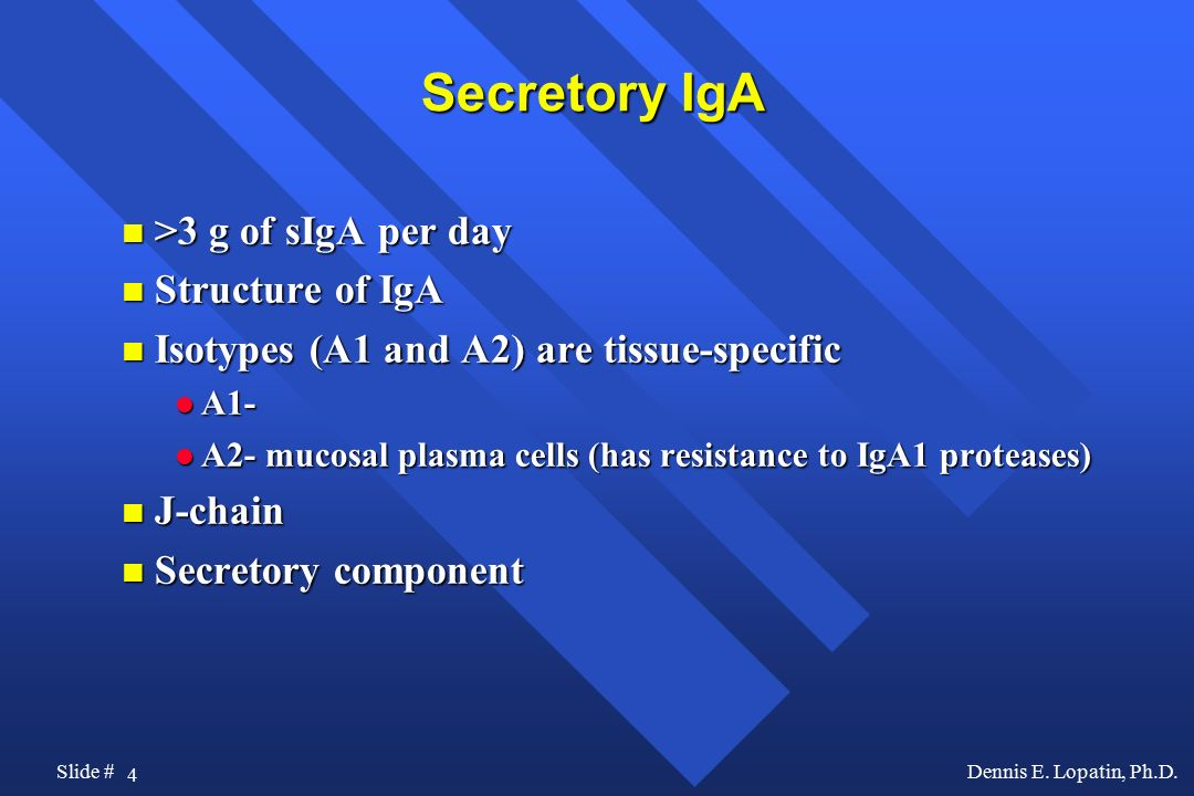 Secretory IgA >3 g of sIgA per day Structure of IgA