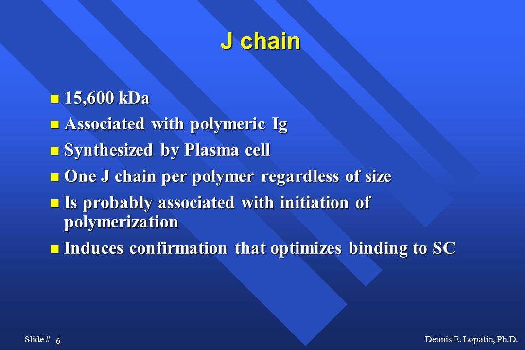 J chain 15,600 kDa Associated with polymeric Ig