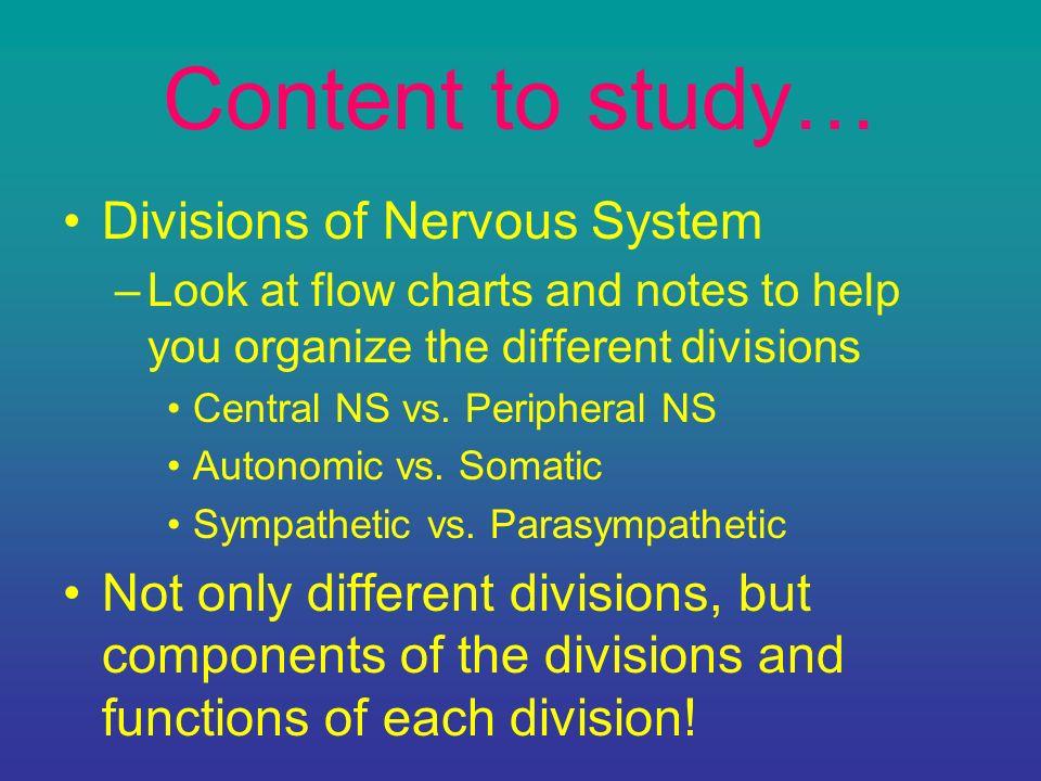 Nervous System Quiz 25 points 8 questions. - ppt download