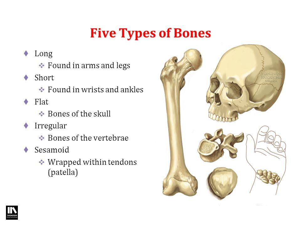 Amazing Bones In Arms Image Human Anatomy Images Fullthreadahead