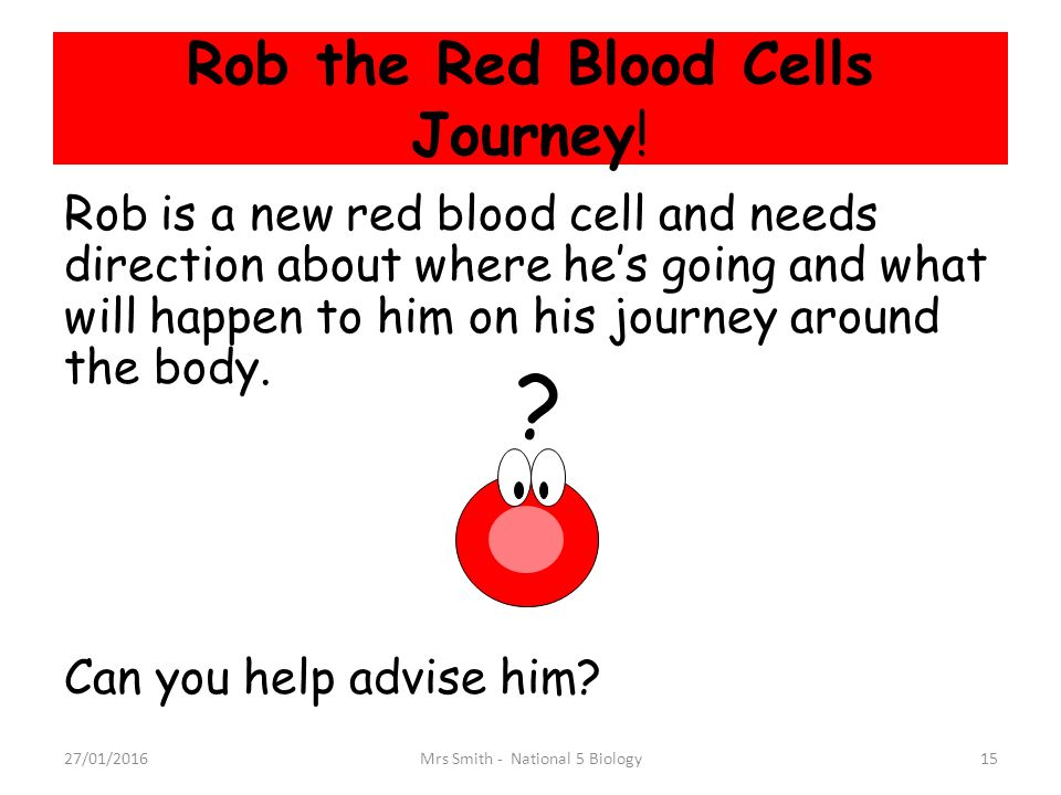 red blood cells journey through the body