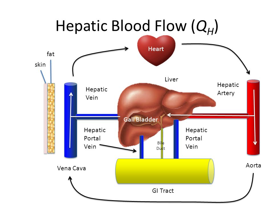 Diagram Of Blood Supply To The Liver - DIY Enthusiasts Wiring Diagrams •