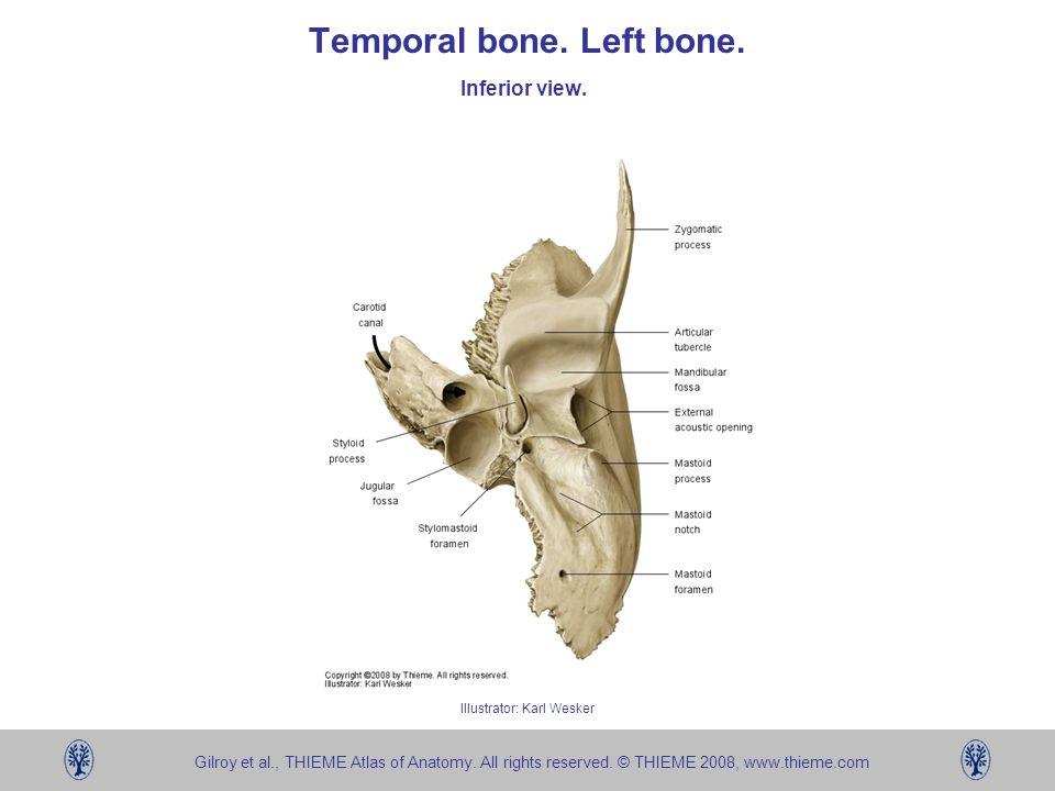 Temporal Bone Left Bone Ppt Video Online Download