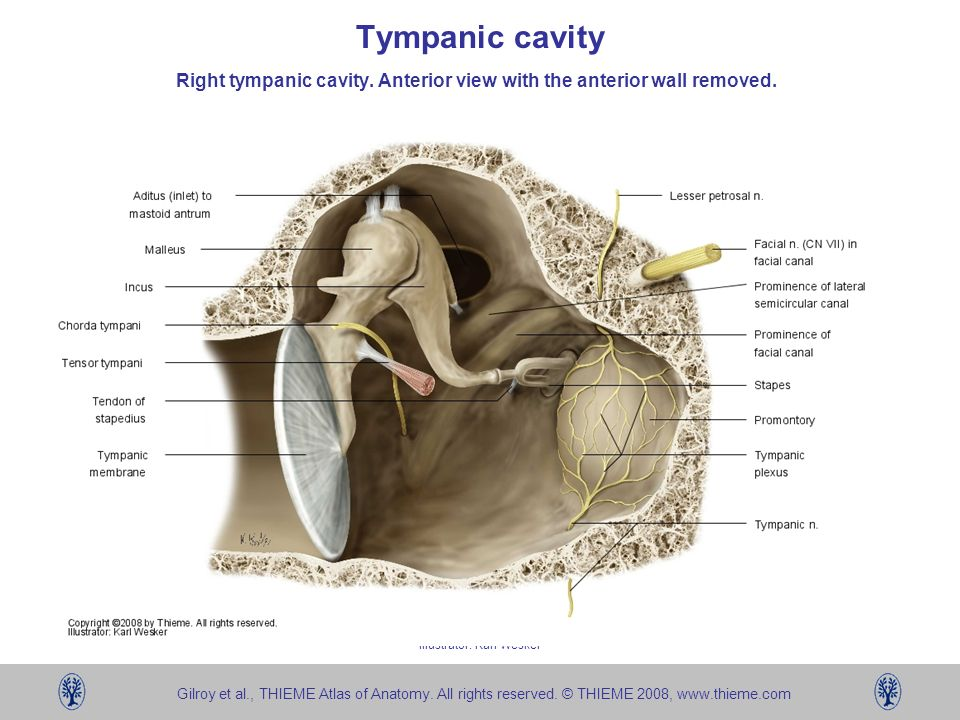 Temporal Bone Left Bone Ppt Video Online Download