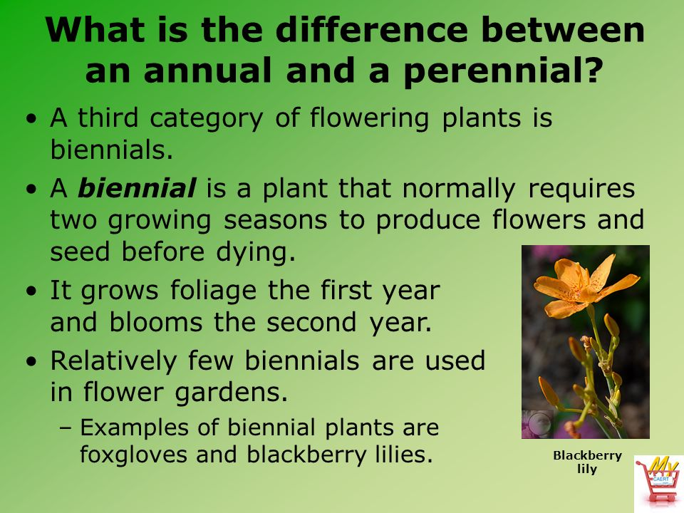 What Is The Difference Between An Annual And A Perennial