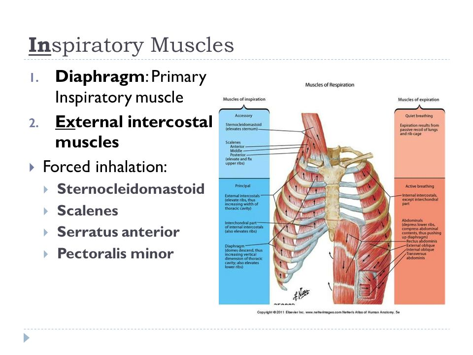 Respiratory Function Breathing Respiration Ppt Video Online Download