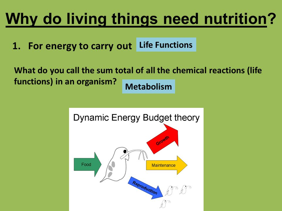 why do living organisms need nutrition