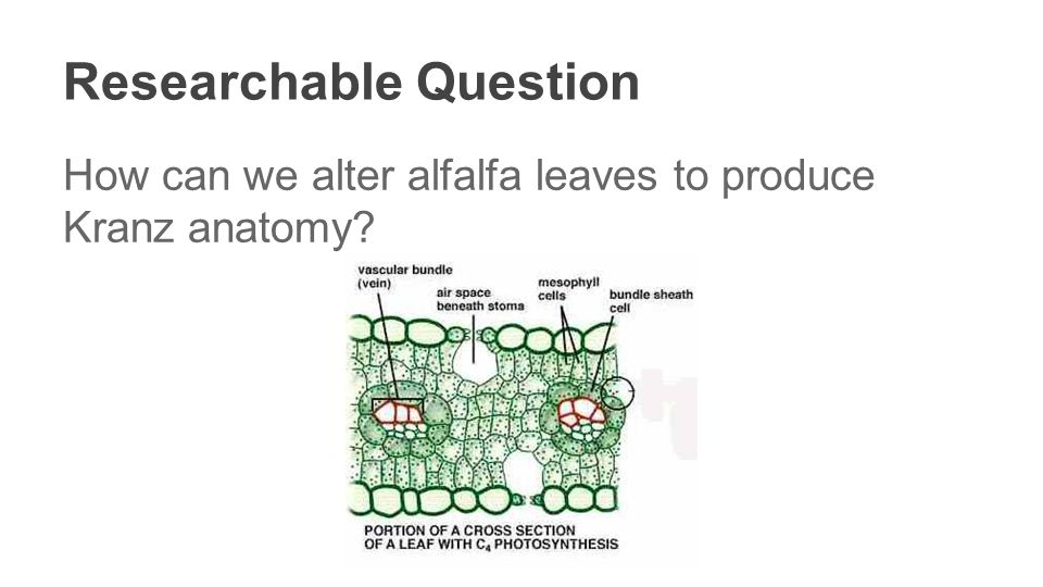 First Steps to C4 Alfalfa - ppt video online download