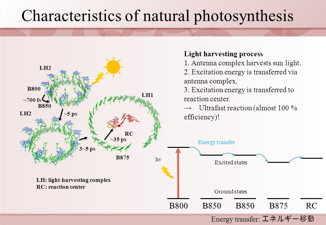 Ultrafast energy transfer of artificial dyes conjugated to characteristics of natural photosynthesis ccuart Gallery