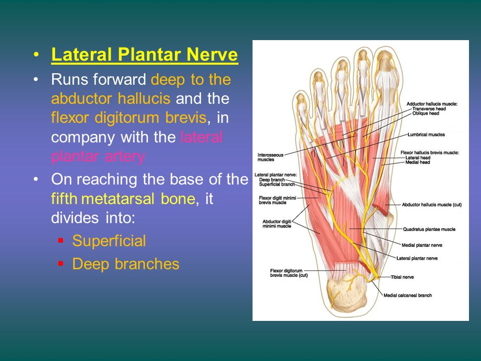 The Sole Of The Foot The Planter Aspect Of The Foot Dr Zeenat