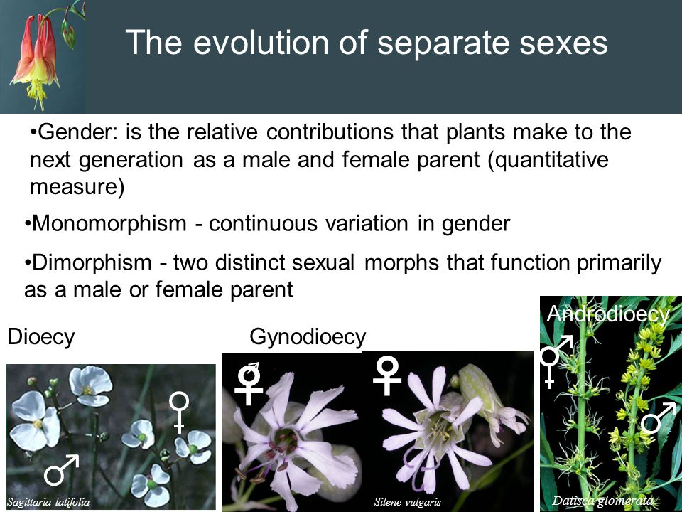 Sexually dimorphic plants