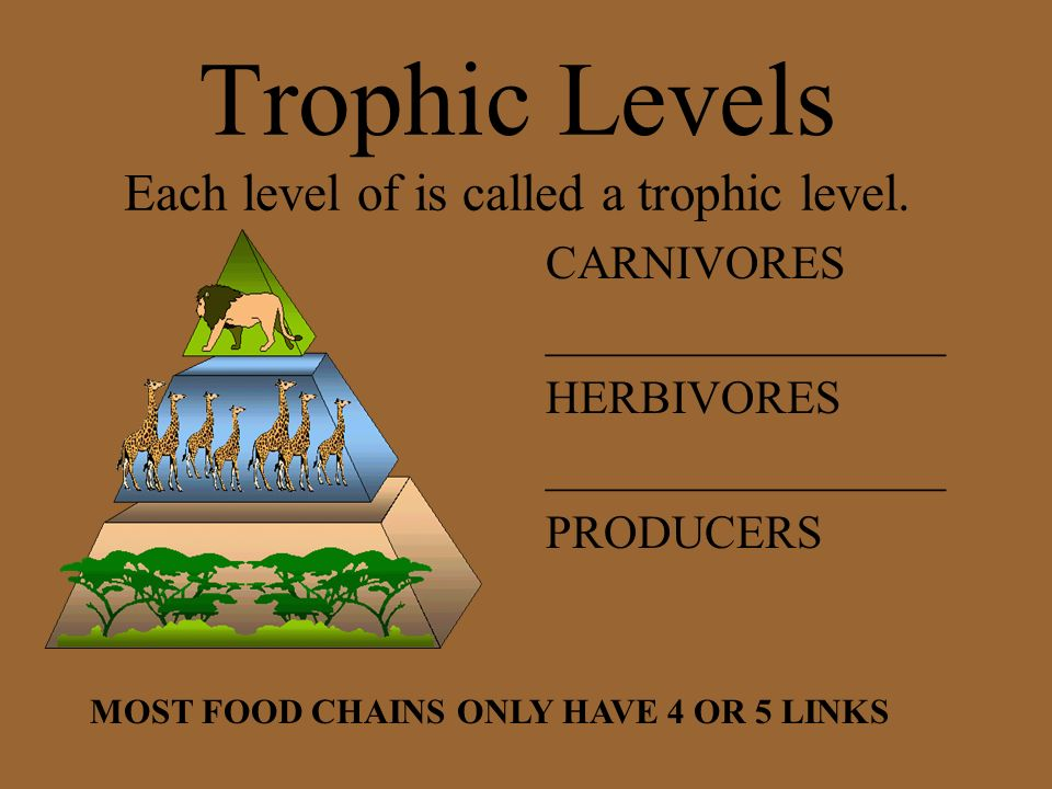 Trophic Levels Each level of is called a trophic level.