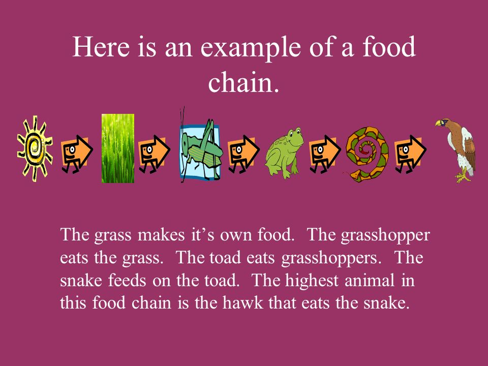Here is an example of a food chain.