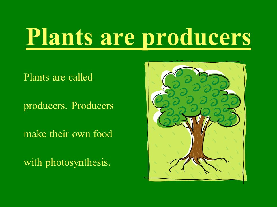 Plants are producers Plants are called producers. Producers