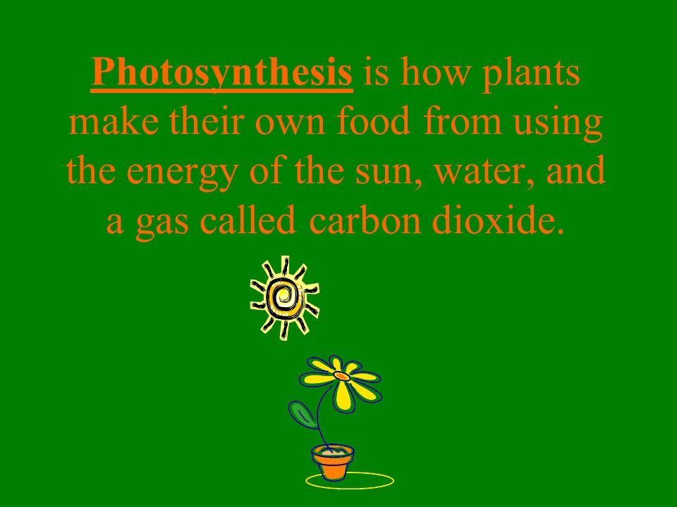 Photosynthesis is how plants make their own food from using the energy of the sun, water, and a gas called carbon dioxide.
