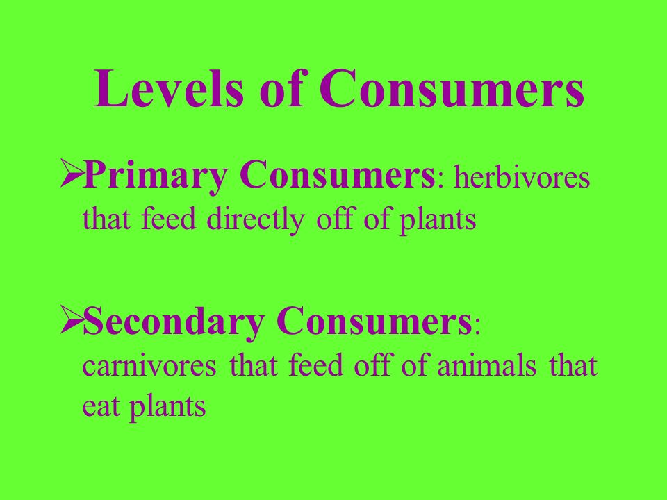 Levels of Consumers Primary Consumers: herbivores that feed directly off of plants.