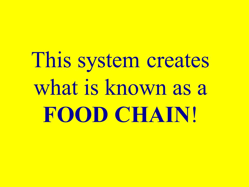 This system creates what is known as a FOOD CHAIN!