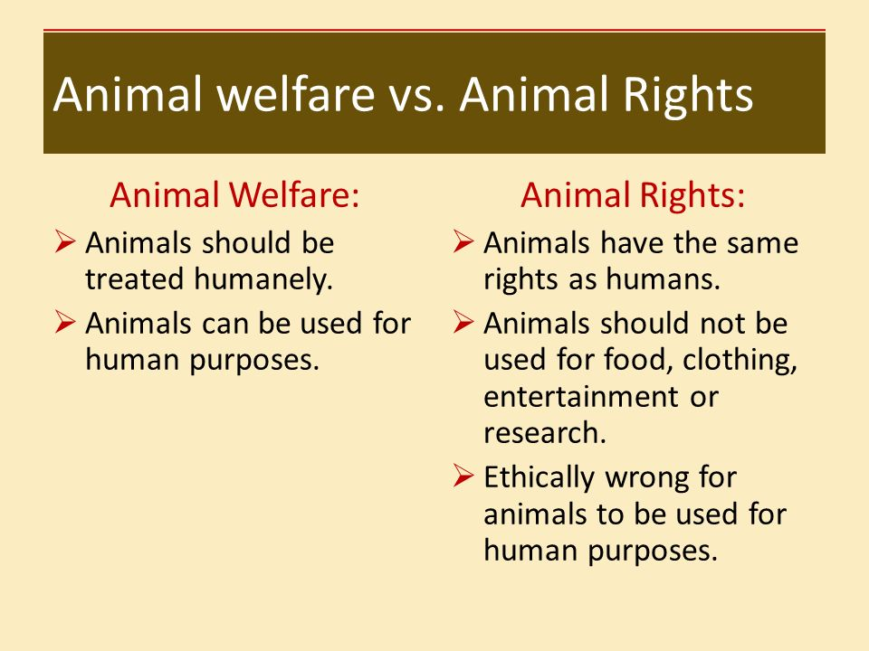 do animals have rights With all points in mind, in my opinion, i conclude that animals do have rights and should be respected but also should be allowed to be killed due to the right reasons for example if there is a virus spreading and the only way to cure is the usage of animals then for that reason you should kill an animal.