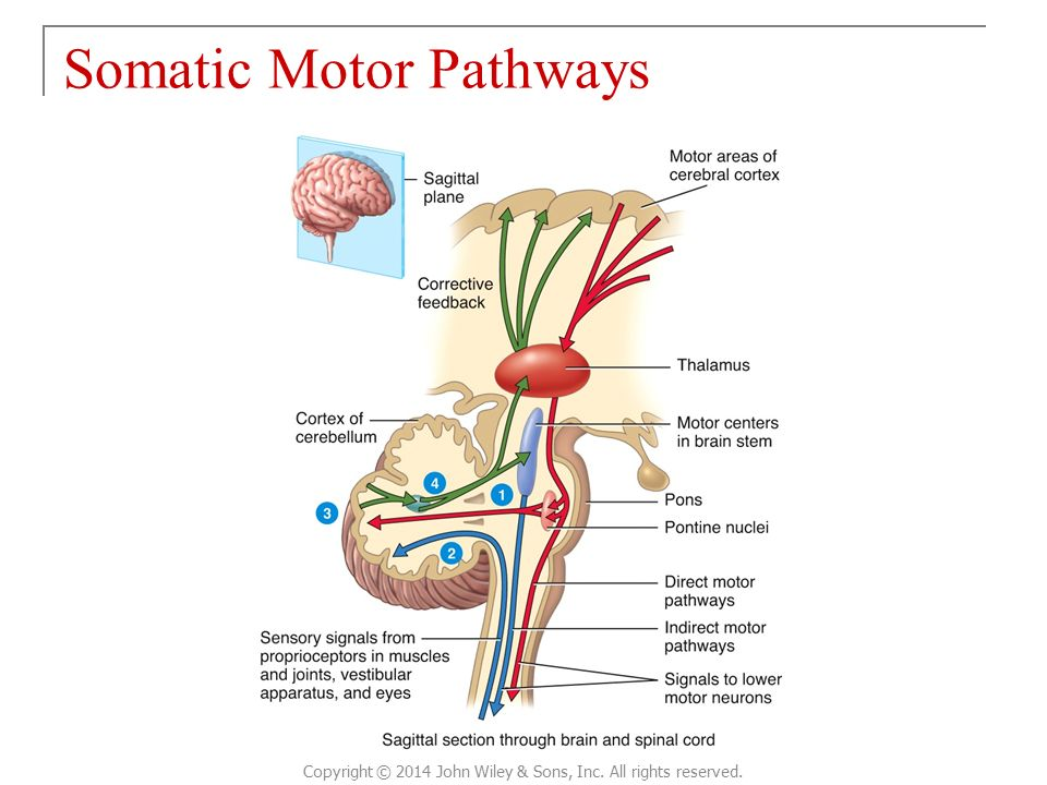 definitions in anatomy and physiology Topics covered in anatomy and physiology instructional units semester 1 introduction to the human body define anatomy and physiology describe each give physiological examples cellular physiology cell structures and functions maintaining homeostasis cell to cell communication.