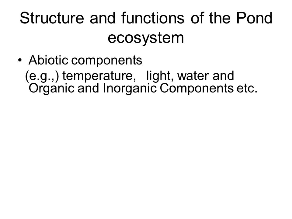 Structure and functions of the Pond ecosystem