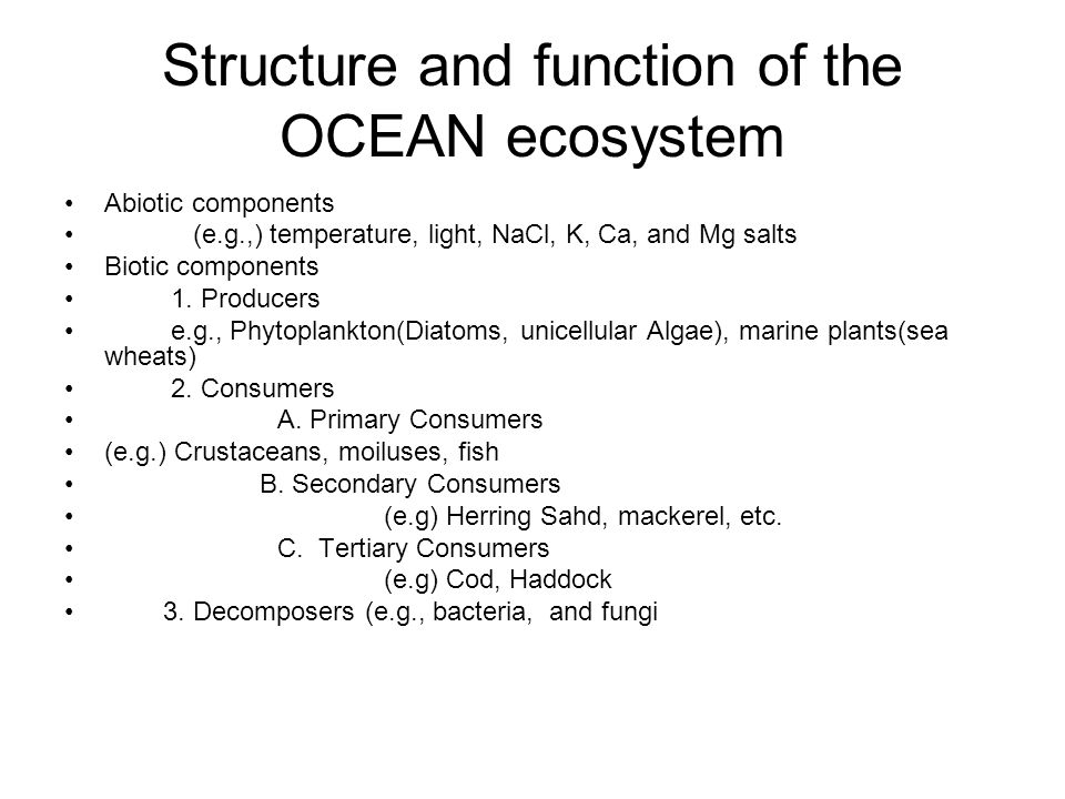Structure and function of the OCEAN ecosystem