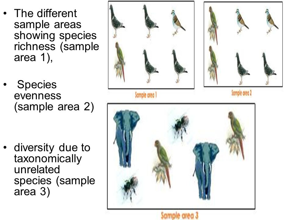 The different sample areas showing species richness (sample area 1),