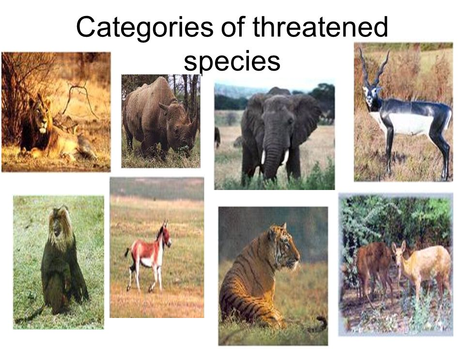 Categories of threatened species